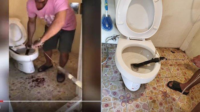 Viral di Detik-detik Warga Keluarkan Ular Kobra dari Lubang Toilet Pakai Tali, si Ular Terus Melawan