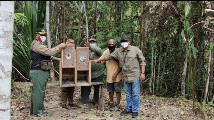 BBKSDA Papua Lepasliarkan 12 Ekor Satwa, Ada Sepasang Cenderawasih Kuning