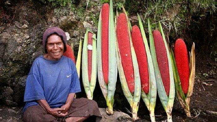 Khasiat dan Manfaat Buah Merah dari Papua