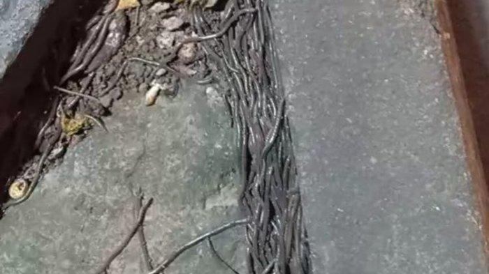 Penjelasan BMKG soal Fenomena Banyaknya Cacing Keluar dari Tanah di Solo dan Klaten
