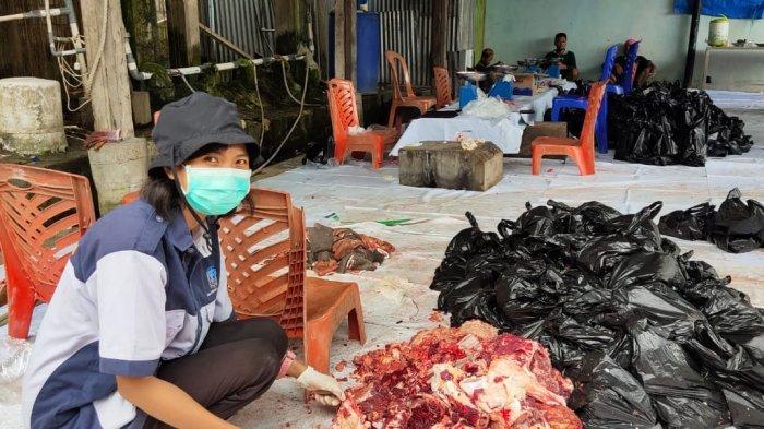 Disbunak Jayapura Temukan Cacing Hati Pada 9 Ekor Sapi Kurban di Masjid Agung Al-Aqsha Sentani