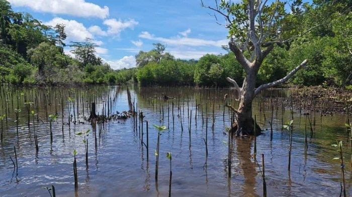 Program Restorasi Gambut dan Rehabilitasi Mangrove Tingkatkan Kesejahteraan Masyarakat