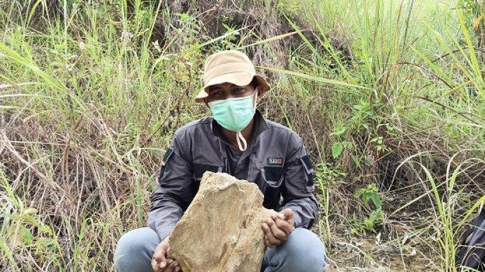 Arkeolog Papua Temukan Fosil Kayu Berumur 15 Juta Tahun di Perbukitan Kampung Abar Sentani