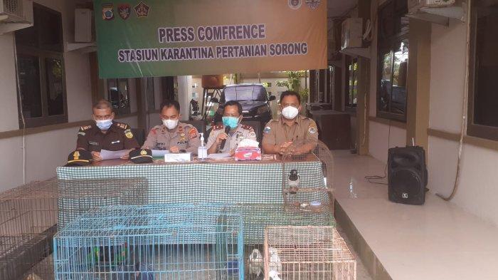 Polisi dan Balai Karantina Berhasil Gagalkan Penyelundupan Satwa Endemik Papua