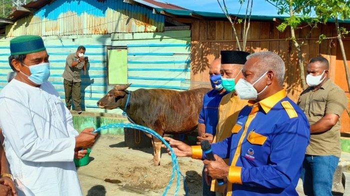 DPW NasDem Papua Barat Distribusikan 80 Ekor Sapi