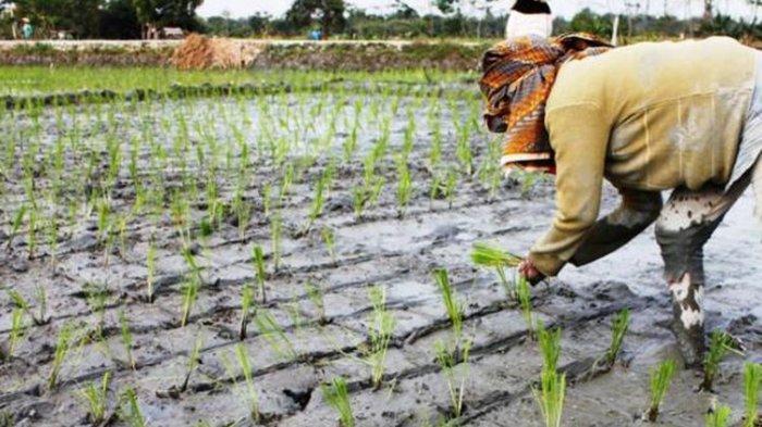 Harapkan Balai Kasuari Bantu Petani Mimika, Waka Polda Papua: Mudahan Jadi Tonggak Pertanian