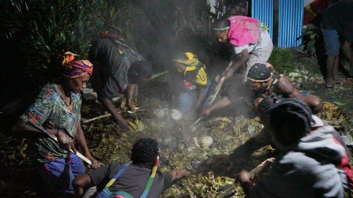 Selamat dari Serangan KKB di Beoga, Kepala Suku Dambet Gelar Bakar Batu sebagai Ungkapan Syukur