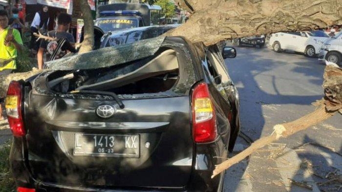Kronologi Mobil Tertimpa Pohon Mahoni saat Berhenti di Lampu Merah, Ada Bayi 2 Bulan di Dalamnya
