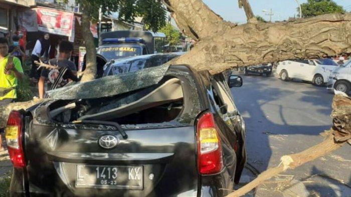 Kronologi Pohon Timpa Mobil yang Berhenti di Lampu Merah, Warga Histeris Peringatkan Sopir