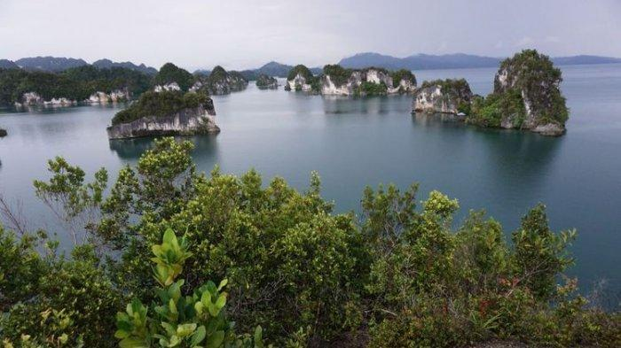 Ingin Menjelajahi Kekayaan Bawah Laut Raja Ampat? Catat Waktu Terbaik untuk Menyelam di Sana