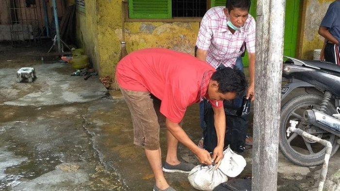 Kasus Jagal Kucing, Animal Defender Indonesia: 1 Kg Butuh 3,5 Ekor, Setahun Bisa 1200 Kucing Dijagal