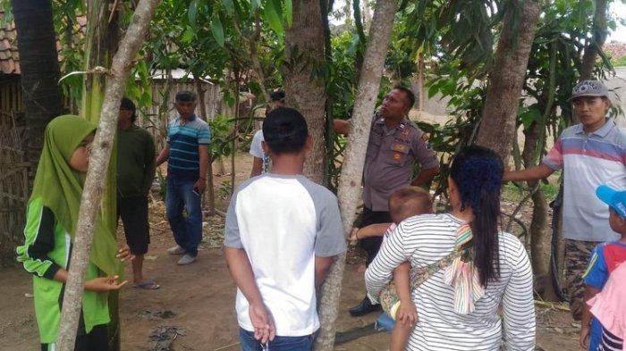 Viral Pohon Menangis di Jember, Polisi Ungkap Dugaan Penyebabnya