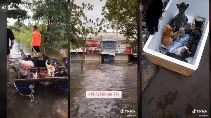 Viral Video Evakuasi Kucing di Tengah Banjir Kalsel, Dinaikkan di Atas Rakit
