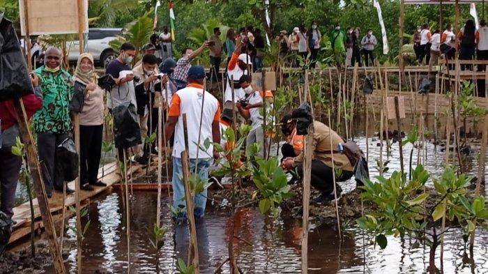 Kelly Kambu : Mangrove Juga Berfungsi Cegah Banjir