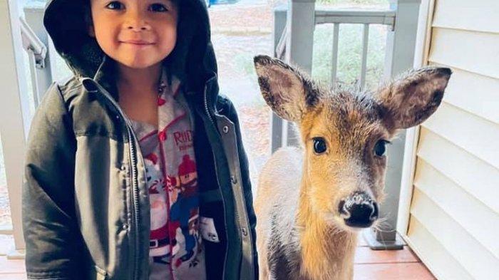 Viral Foto Menggemaskan Seorang Bocah Bawa Anak Rusa ke Rumah, sang Ibu Kaget: Aku Membeku Sesaat