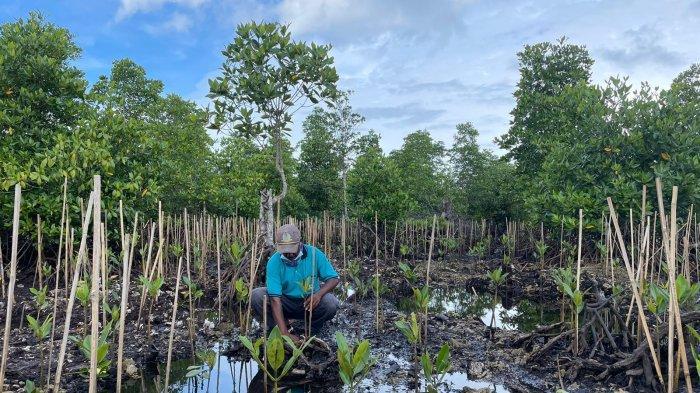 Geliatkan Ekonomi Masyarakat Papua Lewat PEN Mangrove