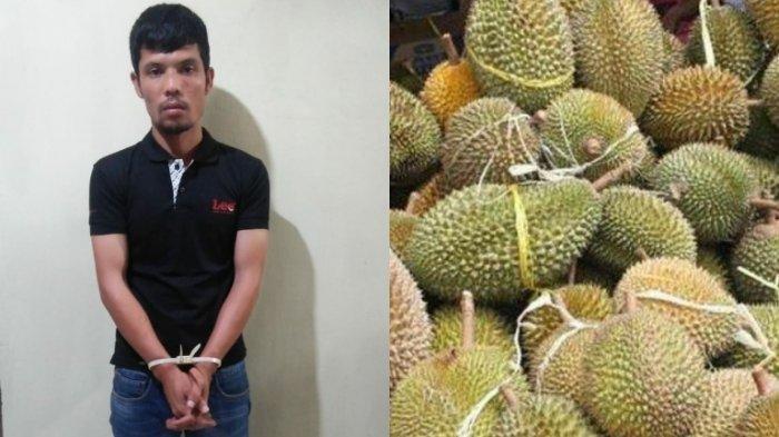 Tengah Panen Durian tapi Diusir Ayah, Gunawan Tak Terima Ambil Clurit dari Mobil dan Bunuh Korban
