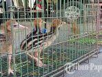 18082021-satwa-endemik-papua.jpg