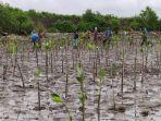 23072021-mangrove-papua-barat.jpg