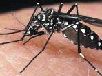 24062021-nyamuk-malaria.jpg