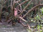 buronan-ditemukan-setelah-empat-hari-menggantung-di-pohon.jpg