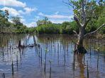 ekosistem-mangrove.jpg