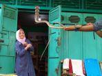 iin-ayu-55-mengoleksi-berbagai-macam-ular.jpg