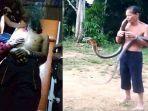 king-kobra-bunuh-pawang-ular-di-toho-kabupaten-mempawah-kalimantan-barat.jpg