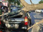 mobil-toyota-avanza-milik-sanjaya-tertimpa-pohon-tumbang-di-traffic-light-g.jpg
