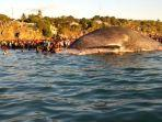 ratusan-warga-kupang-menyaksikan-paus-yang-terdampar.jpg