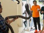 reaksi-raffi-ahmad-dan-denny-cagur-ketika-ditantang-panji-petualang-pegang-king-kobra.jpg