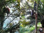 sejumlah-siswa-di-simalungin-memanjat-pohon-untuk-mencari-sinyal.jpg