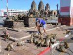 seorang-pria-menyapu-jalan-dan-dikelilingi-oleh-para-monyet.jpg