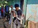 ular-piton-4-meter-vs-kucing-di-batanghari-yusuf-bantu-gigit-buntut-ular.jpg