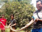 warga-memerlihatkan-ular-piton-sepanjang-4-meter.jpg
