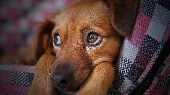Virus Baru Corona Ditemukan di Malaysia, Menular dari Anjing ke Manusia