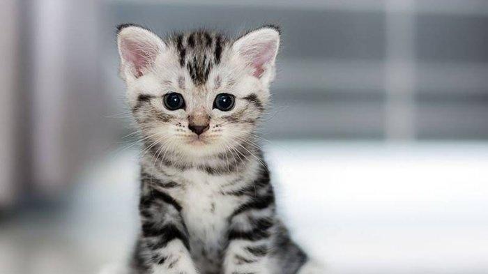 Tahapan Memandikan Kucing Agar Tidak Berontak Jangan Asal Pakai Shampo Kucing Tribun Pekanbaru