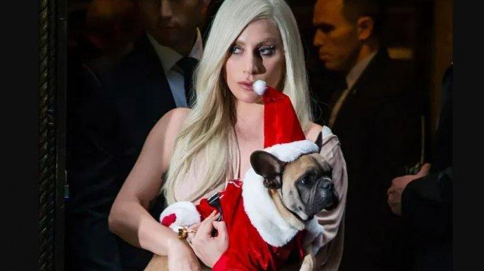 Anjing Lady Gaga Dicuri, Tebar Sayembara Rp 7,5 Miliar Untuk 2 Ekor Bulldog Prancis