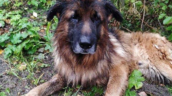 Kiryusha, anjing jenis German Shepher yang sengaja dikubur hidup-hidup oleh pemiliknya. Dia dilaporkan berhasil keluar dari kuburannya sendiri dan meminta pertolongan di jalan raya, sebelum diselamatkan dalam keadaan basah kuyup dan kelaparan.