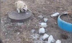 Lidah Anjing ini Membeku di Penutup Got, Orang Sekitar Kemudian Melakukan Hal ini