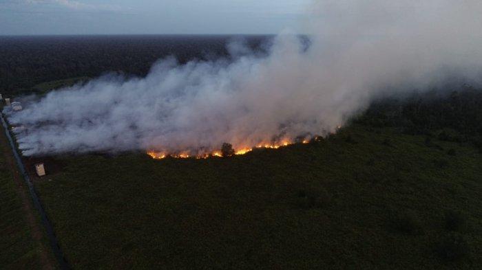10 Hektare Lahan di Pelalawan Terbakar, Lokasi Jauh, ini Upaya Tim Gabungan