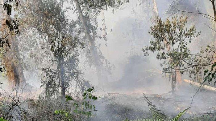 323 Ha Lahan di Pelalawan Terbakar hingga Juli 2021,Tersebar di 34 Desa, Ini Daerah Rentan Karhutla