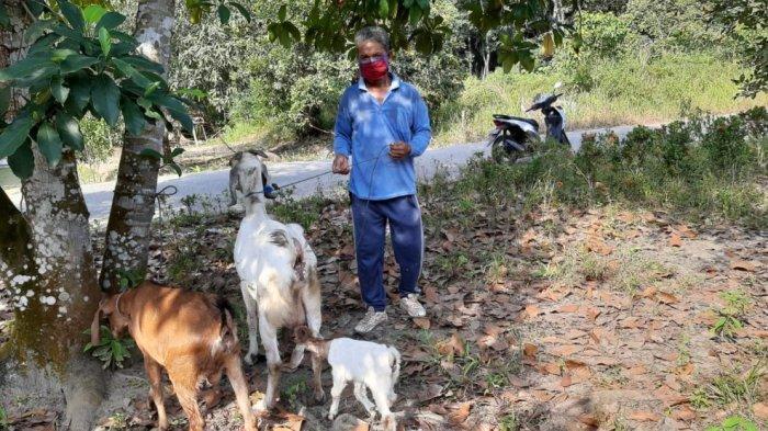 Asian Agri Bantu Peternak Lima Desa di Kecamatan Langgam