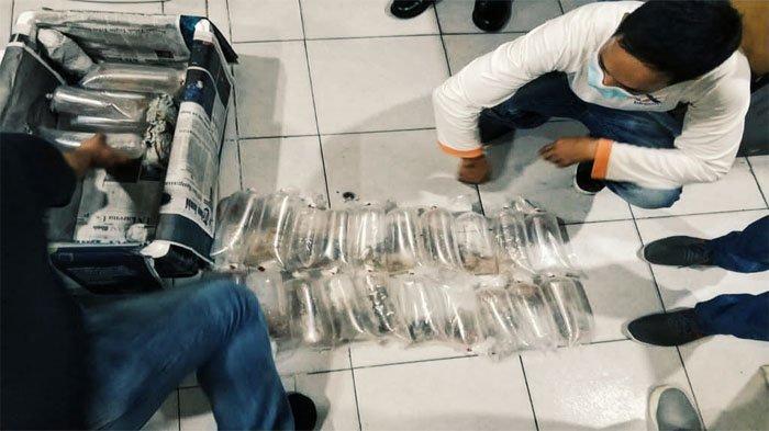 Penyelundupan Benih Lobster Melalui Pelabuhan Samudera Inhil Berhasil Digagalkan, 3 Pelaku Ditangkap