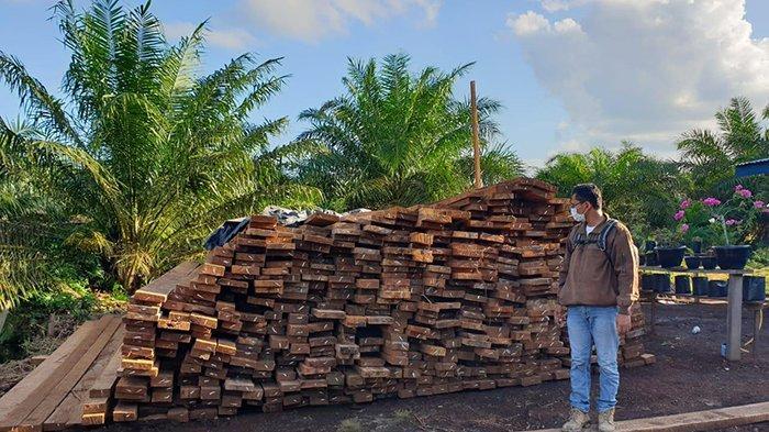 Manfaatkan Kanal Bawa Hasil Jarahan,110 Kubik Kayu Hasil Pembalakan Liar Disita di Lima Lokasi