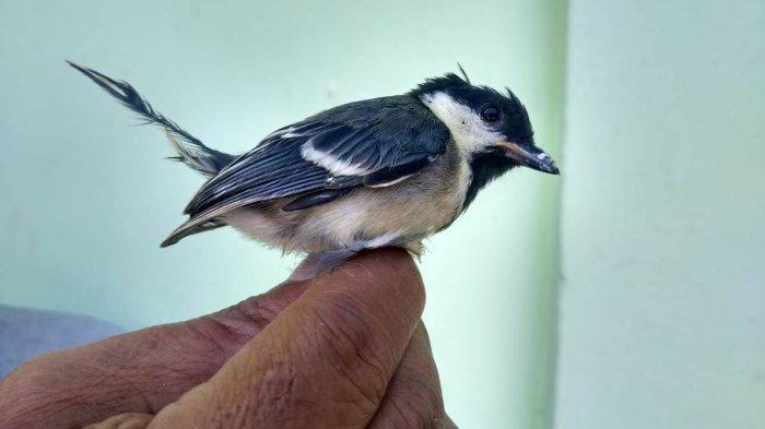 BBKSDA Riau Gagalkan Pengiriman Ratusan Ekor 3 Jenis Burung Tanpa Dilengkapi Dokumen Sah