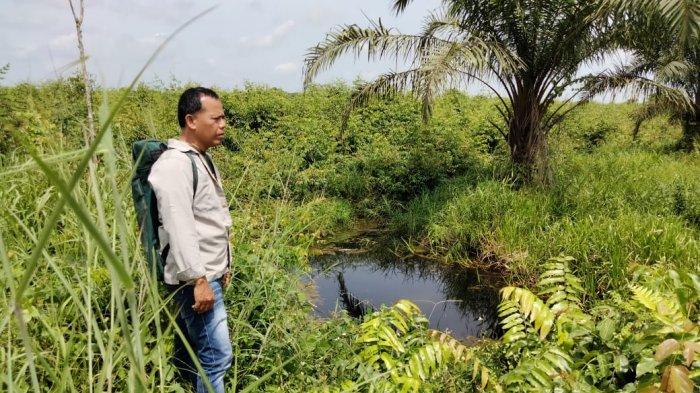 Berhasil Digiring Keluar Kebun Warga Pelalawan, Kini Dua Ekor Gajah Liar di Areal Perusahaan