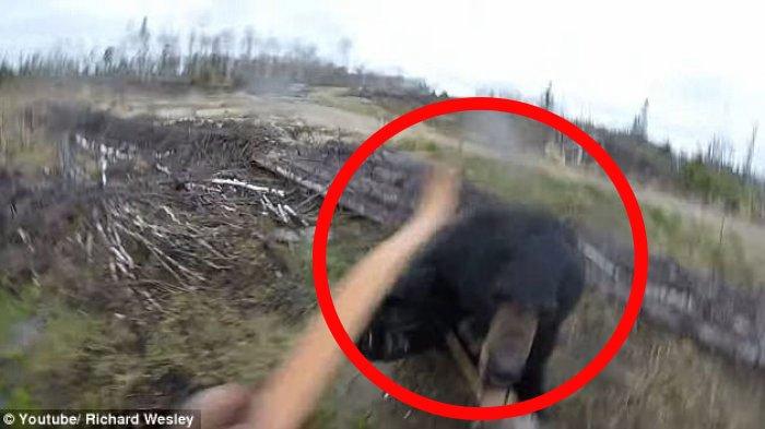 Lolos dari Maut, Saat Kepalanya Digigit, Pria Ini Balas Menggigit Lidah Beruang hingga Putus