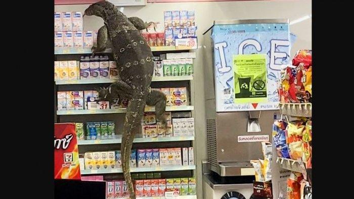 Biawak Raksasa Masuk Mini Market, Pengunjung Histeris Ketakutan, Mirip Dinosaurus