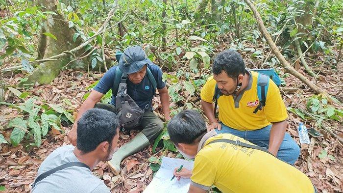 Gajah Liar Kembali Muncul di Pangkalan Kuras Riau, Ini Pesan Sang Camat pada Warga